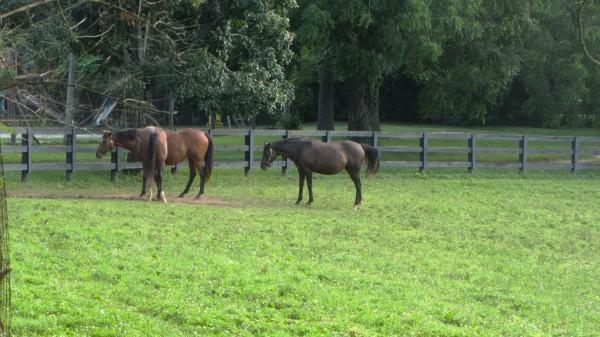 Beautiful horses in the church's paddock