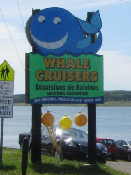 The sign for a whale watching business